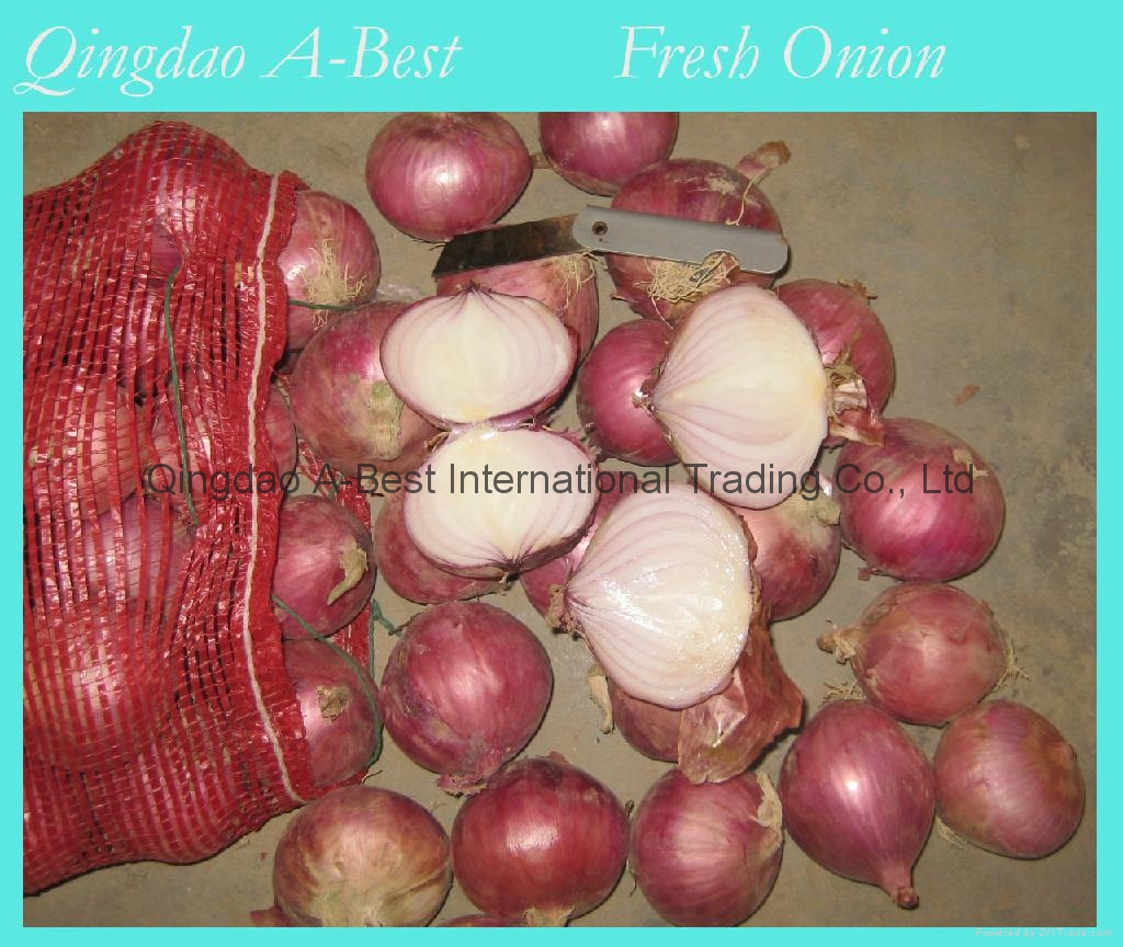 2018 NEW CROPS FRESH RED ONION 13