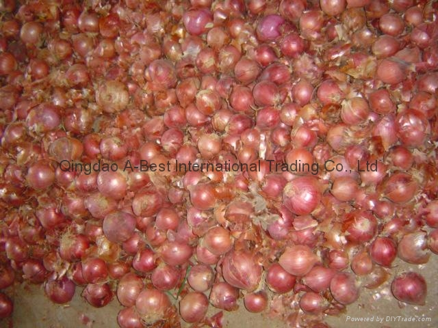 2018 NEW CROPS FRESH RED ONION 10