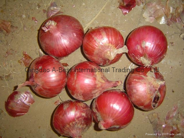 2017 NEW CROPS FRESH RED ONION 15