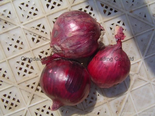 2017 NEW CROPS FRESH RED ONION 17