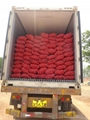 2017 NEW CROPS FRESH RED ONION 20