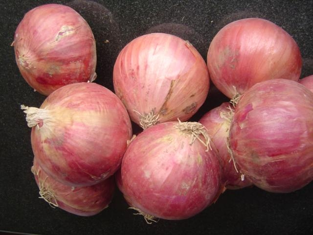 2018 NEW CROPS FRESH RED ONION 1