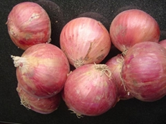 2017 NEW CROPS FRESH RED ONION