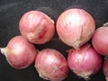 2018 NEW CROPS FRESH RED ONION 19