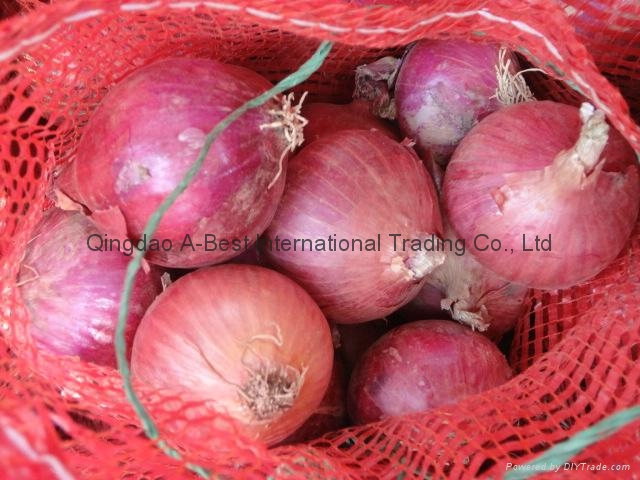 NEW CROPS FRESH RED ONIONS 10