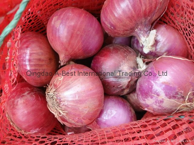NEW CROPS FRESH RED ONIONS 3