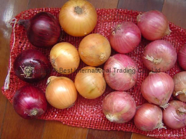 NEW CROPS FRESH RED ONIONS 16