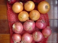 2019 CROPS FRESH YELLOW ONION 11