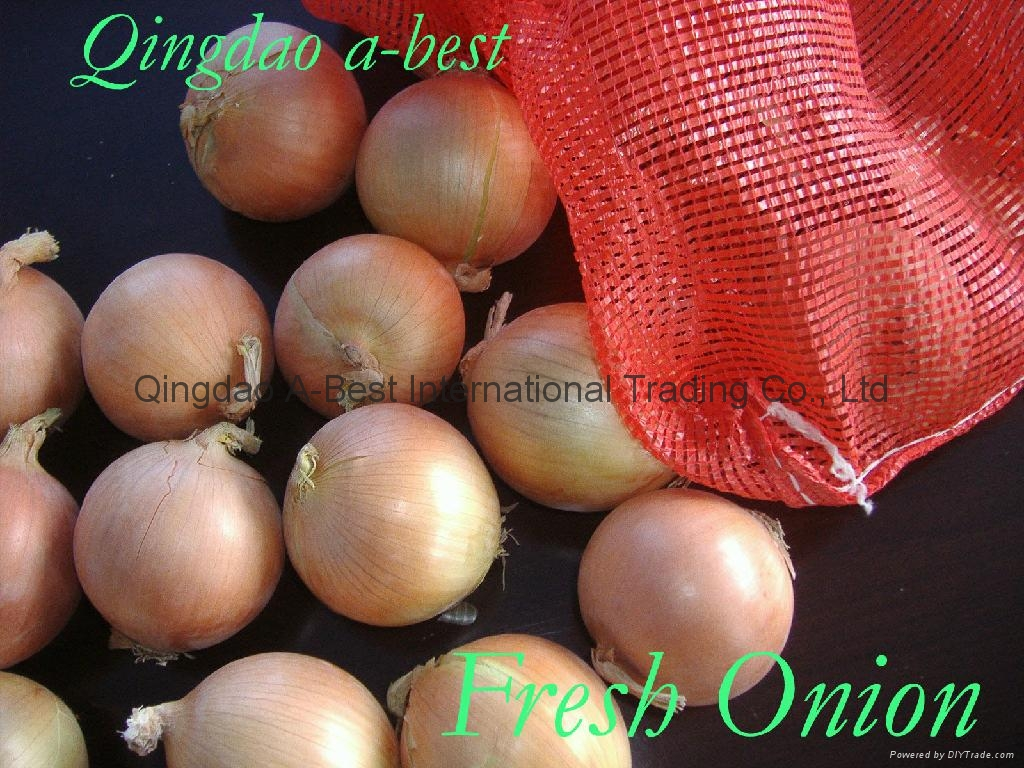 2019 CROPS FRESH YELLOW ONION 19