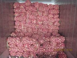 2019 NEW CROPS FRESH RED ONION 7
