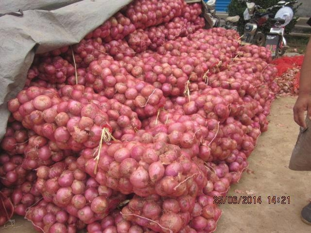 2019 NEW CROPS FRESH RED ONION 8