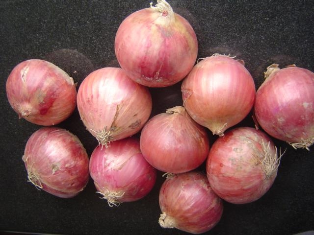 2019 NEW CROPS FRESH RED ONION 3