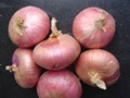 2019 NEW CROPS FRESH RED ONION 6