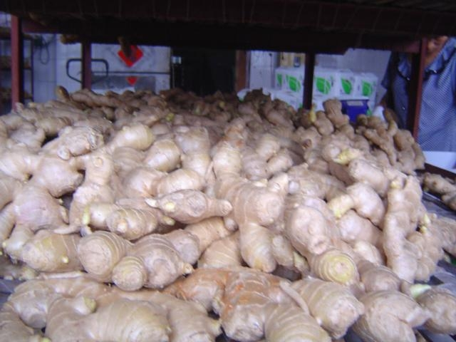 CHINA HIGH QUALITY FRESH GINGER 9