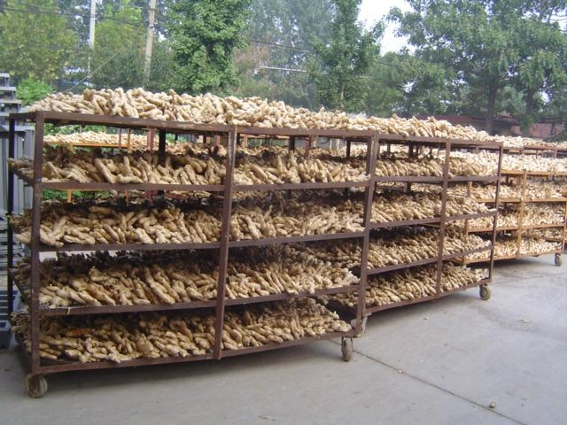 CHINA HIGH QUALITY FRESH GINGER 7