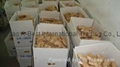 CHINA HIGH QUALITY FRESH GINGER 18