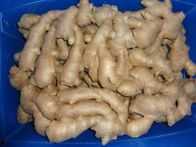 BIG AND FAT FRESH AIR DRIED GINGER