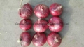 2016 new crops fresh red onion bulbs