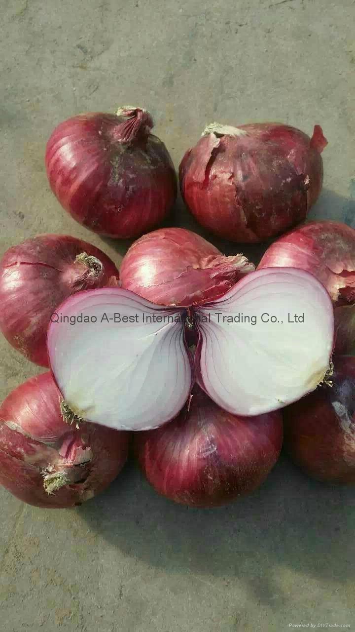 2018 new crops fresh red onion bulbs 3
