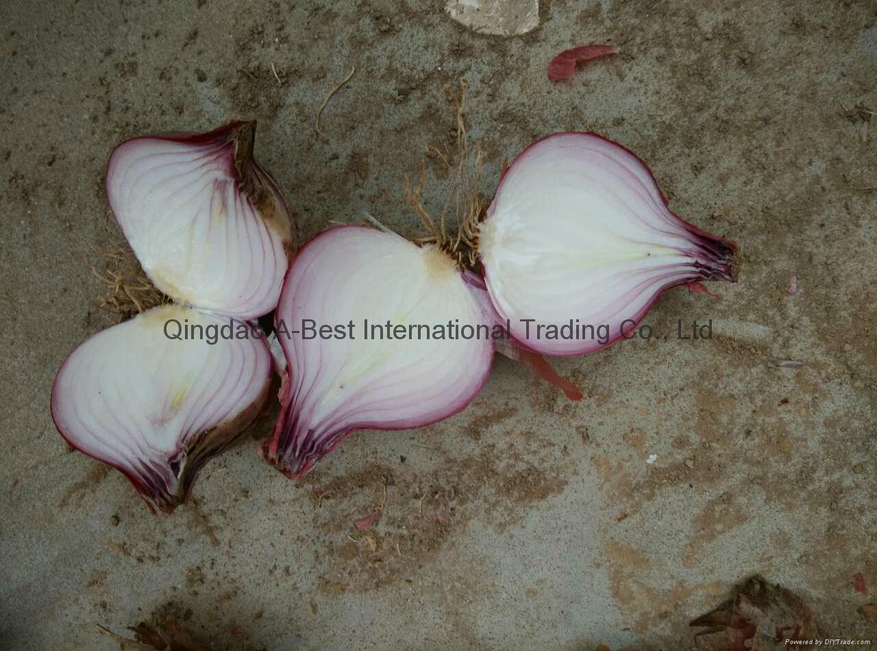 2018 new crops fresh red onion bulbs 4