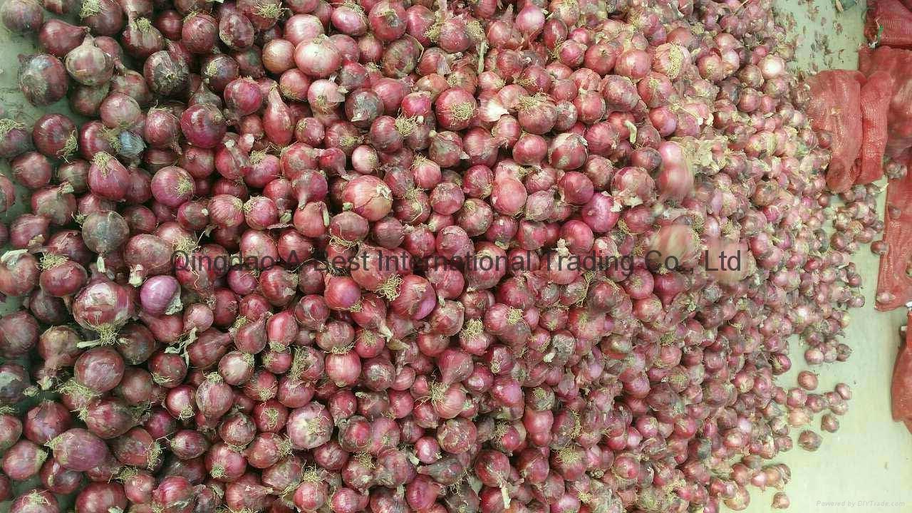 2018 new crops fresh red onion bulbs 6