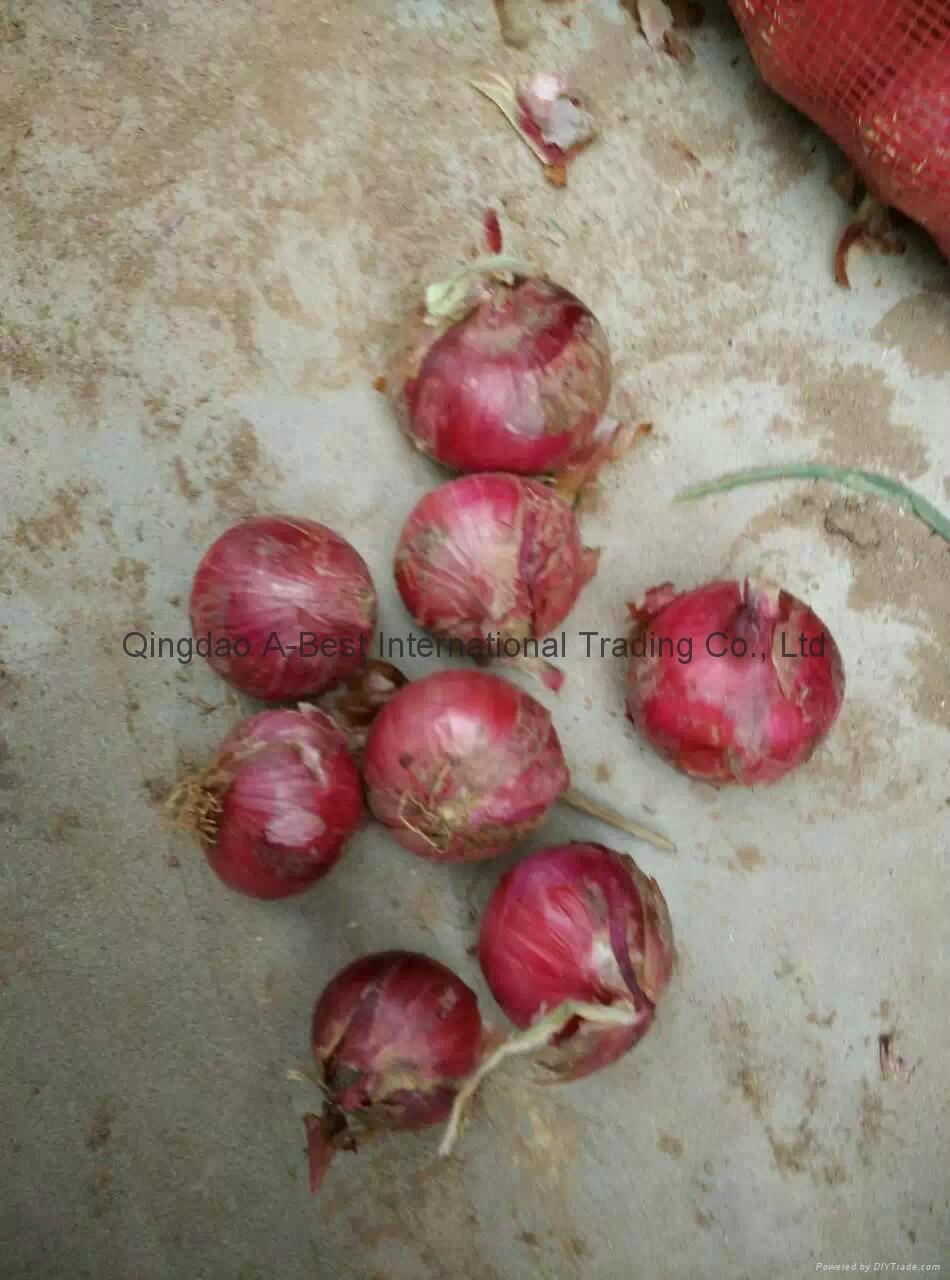 2018 new crops fresh red onion bulbs 7