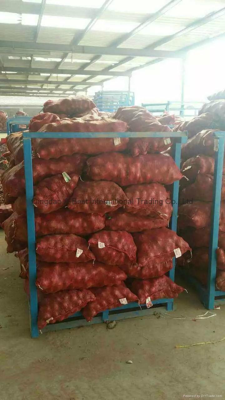 2018 new crops fresh red onion bulbs 8