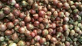 2018 new crops fresh red onion bulbs 9
