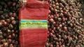 2018 new crops fresh red onion bulbs 10