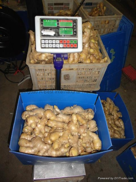 2019 Air dried fresh ginger 6