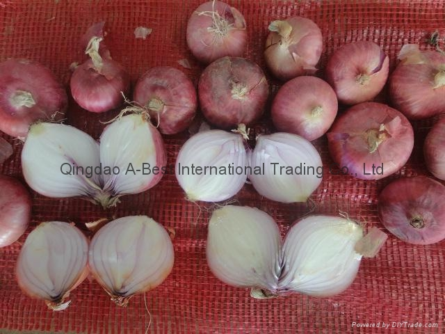 Fresh red onion 9
