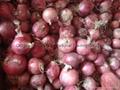 Fresh red onion 8