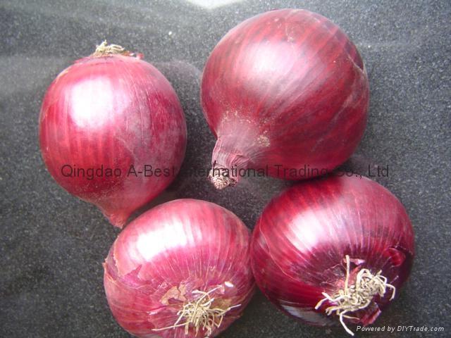 Fresh red onion 18