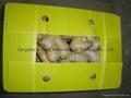 2021 New crops air dried fresh ginger 6