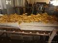 2021 New crops air dried fresh ginger 14