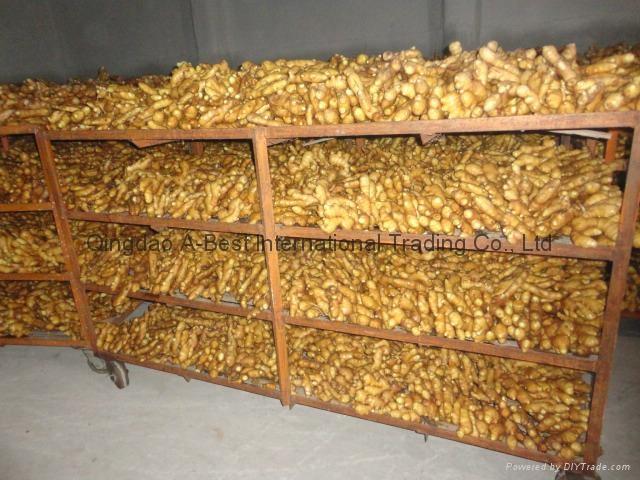 2021 New crops air dried fresh ginger 20