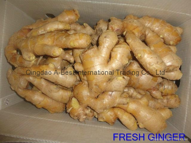 Semi-Air dried fresh ginger 1