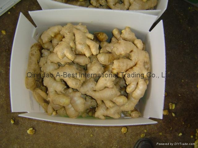 Semi-Air dried fresh ginger 5