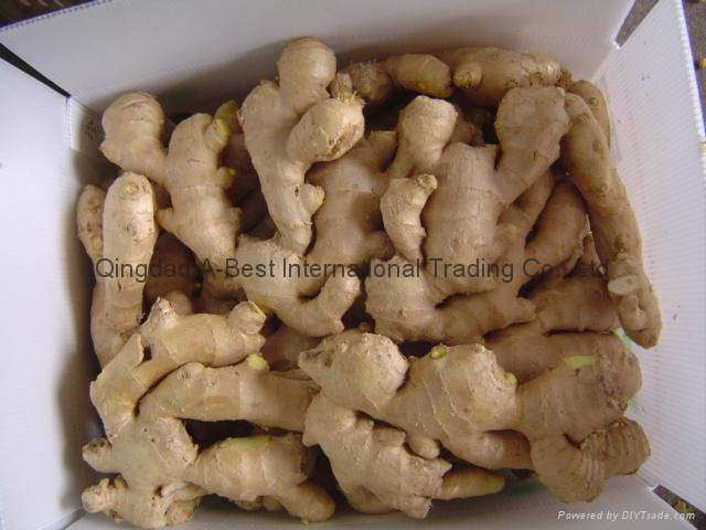 Semi-Air dried fresh ginger 9