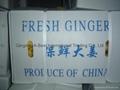 Fresh ginger 8