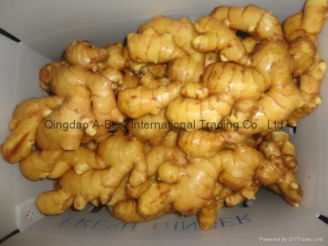 Fresh ginger 13