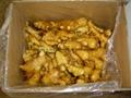 Fresh ginger 16