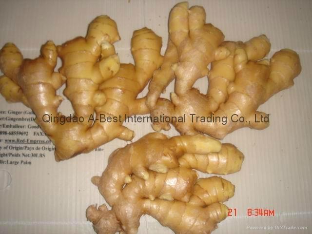 Chinese Fresh Ginger 6