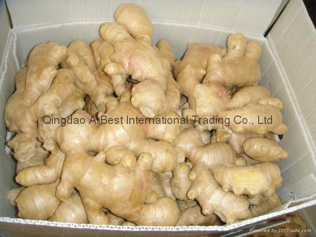 Chinese Fresh Ginger 8