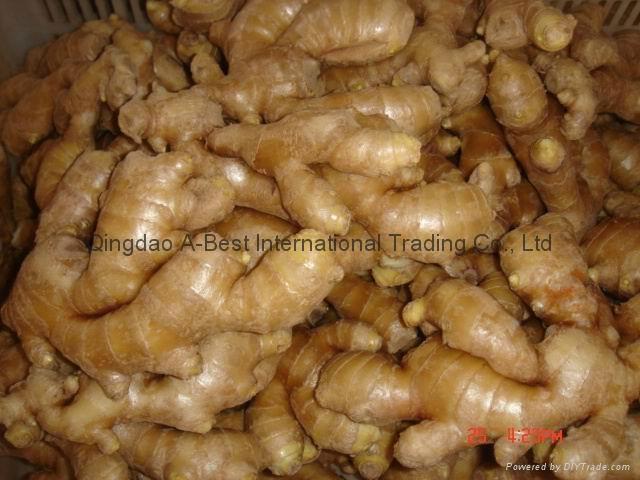 Chinese Fresh Ginger 9