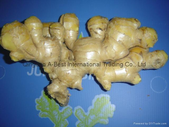 Chinese Fresh Ginger 1