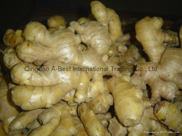 Chinese Fresh Ginger 12