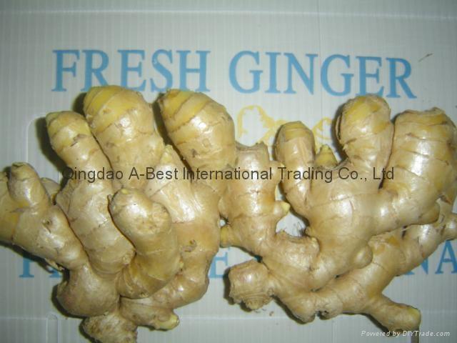 Chinese Fresh Ginger 2