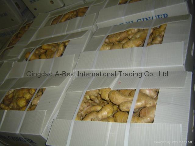 Chinese Fresh Ginger 14