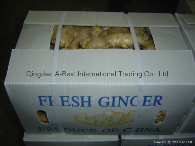 Chinese Fresh Ginger 16